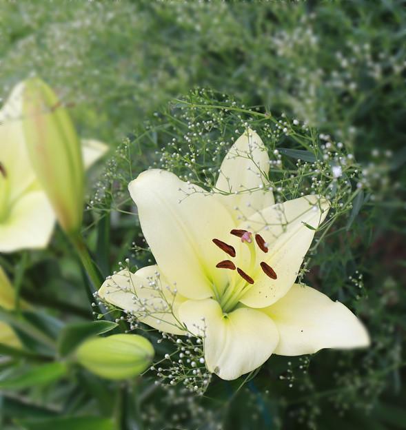 写真: 花壇に咲く花あれこれ?