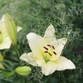 花壇に咲く花あれこれ①