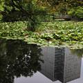 Photos: 旧道庁の庭園?