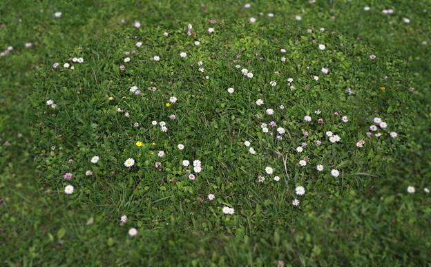 公園に自生する「ときしらずの花」