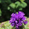 Photos: なんの花なんだろう・・