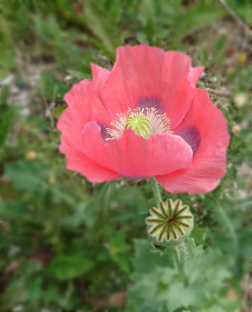 Photos: 造花の様な花びら