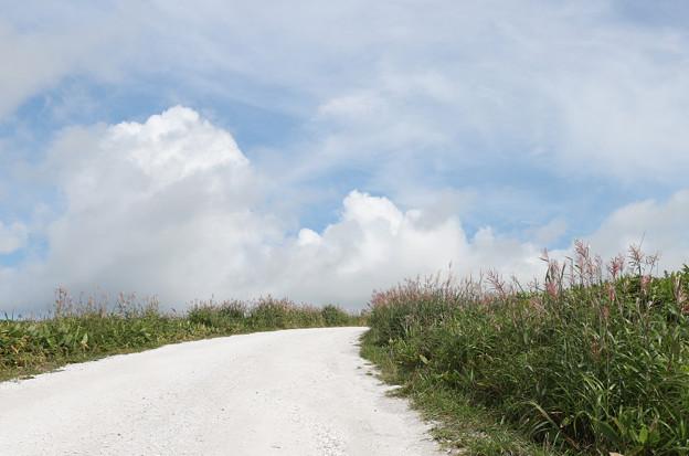 秋の白い遊歩道