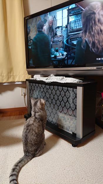 Photos: TV鑑賞