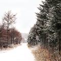 Photos: 新雪
