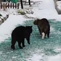 2シッポ巻いて逃げるトラ