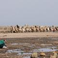 Photos: たかがアサリ、されどアサリ貝