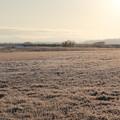 春 冷えの朝2