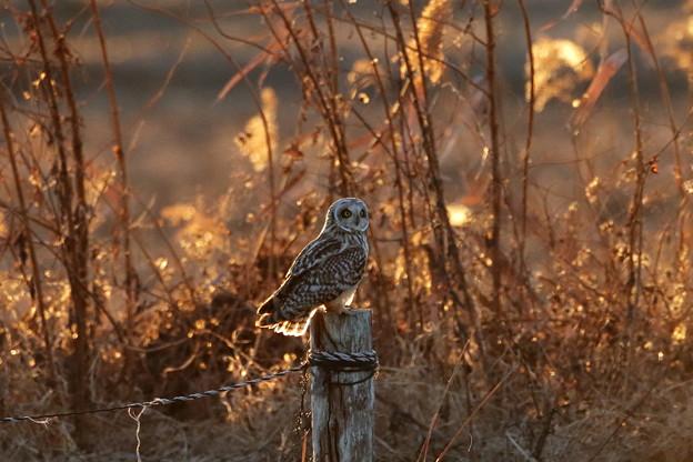 Photos: 夕陽に囲まれて一休み
