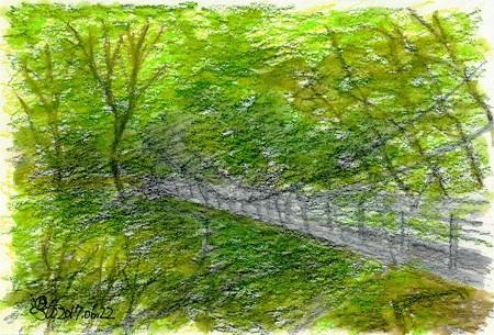 20170622大山滝吊橋