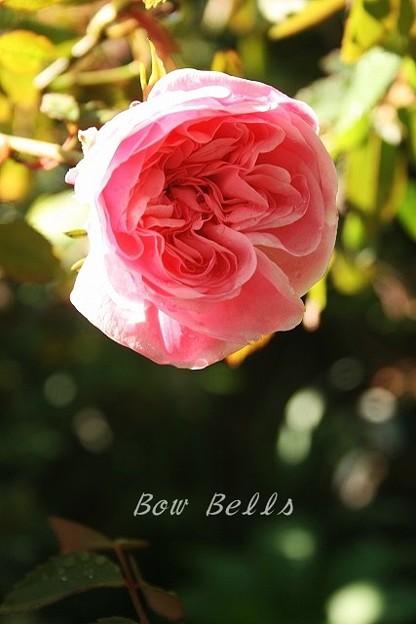 bowbells 15 April 3