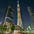 Photos: NEWライトアップ 「幟(のぼり)」