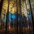 写真: 夜の竹林