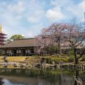 桜の季節 3