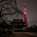 東京タワー KANREKI RED ライトアップ