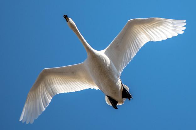 Photos: Cygnus 白鳥座