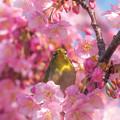 桜ベッドからのお目覚め~