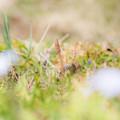 写真: 初春の一コマ