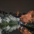 千鳥ヶ淵 桜ライトアップ 1