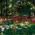 彼岸花の咲く森