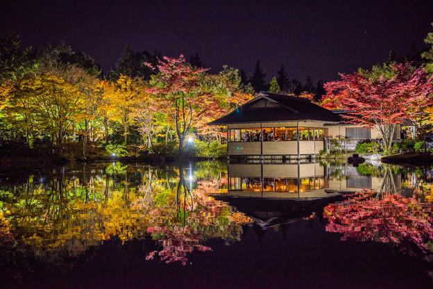 紅葉夜景 2