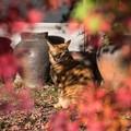 紅葉と猫 1