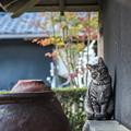 紅葉と猫 2