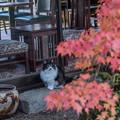 紅葉と猫 4