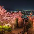 桜夜景 2
