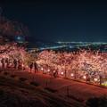 桜夜景 3
