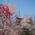 お寺の春 1