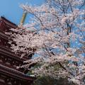 お寺の春 2