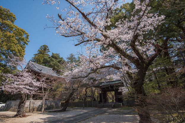 お寺の春 3