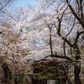 お寺の春 4