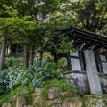 お寺と紫陽花 1