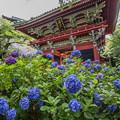 お寺と紫陽花 4