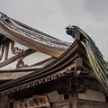Photos: お寺と孔雀