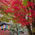 Photos: 京の秋 1