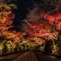Photos: 紅葉ライトアップ