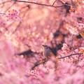 Photos: 春を待つ