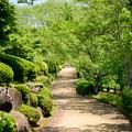 Photos: 緑の道