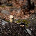 Photos: 岩の上で