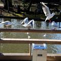 Photos: 鳥飛ぶ