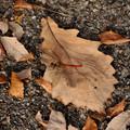枯れ葉にトンボ