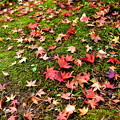 Photos: 秋の落ち葉