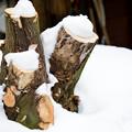 Photos: 雪つもる