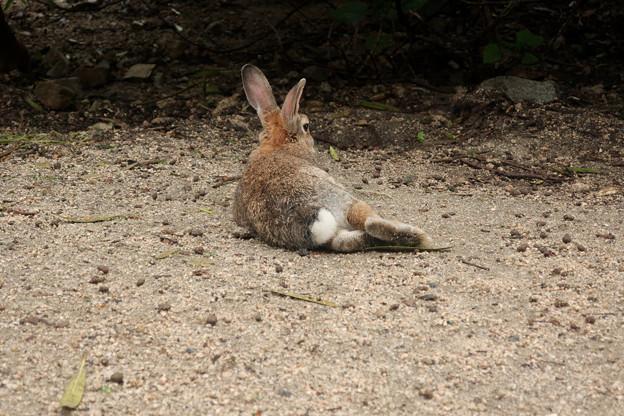 大久野島のウサギ  うさけつ