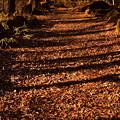 Photos: 木の影
