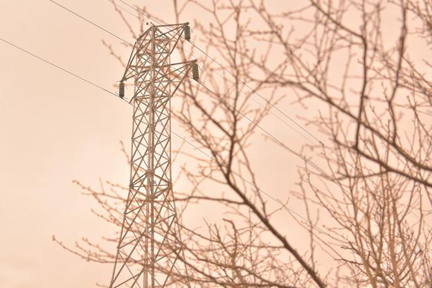 Photos: 枝と鉄塔