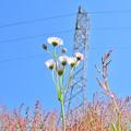 花と空と鉄塔